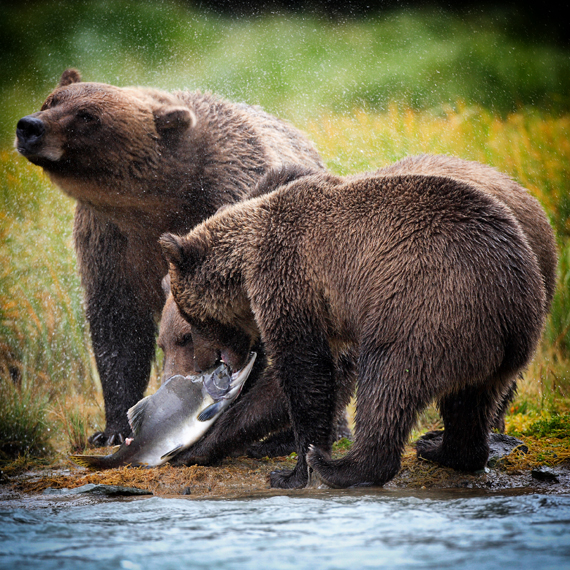 Cruise Planners / Asheville Travel Agency - Tauck Tours to Alaska